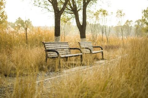 bench-1231683_640